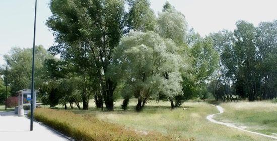 kokosowa_okolica8